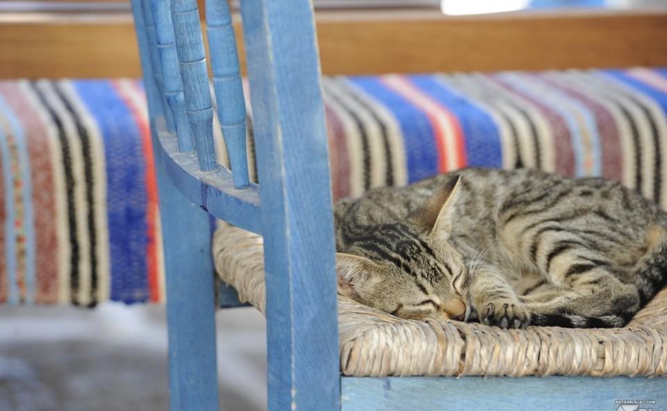 Les nombreux chats de lîle de Santorini
