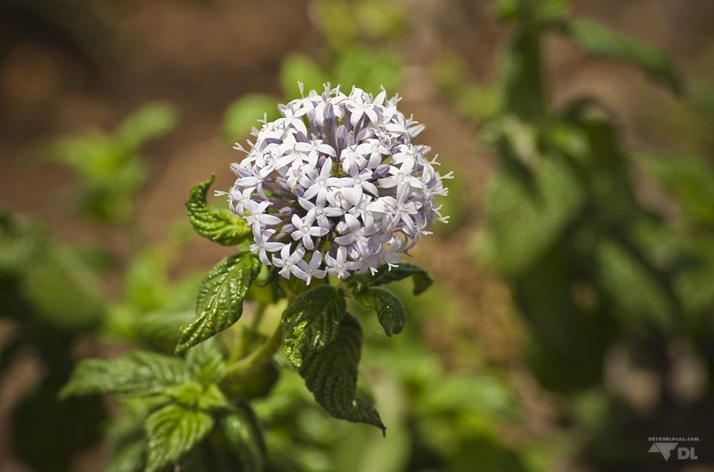 Végétation floriante sur les nombreuses collines de Lushoto