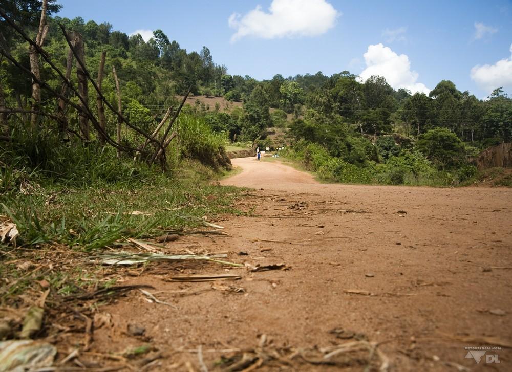 Au détour d'un chemin, terre rouge et conifers.