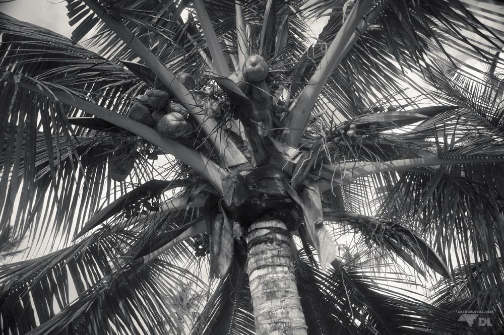Un des nombreux palmiers sur la plage de Kigamboni