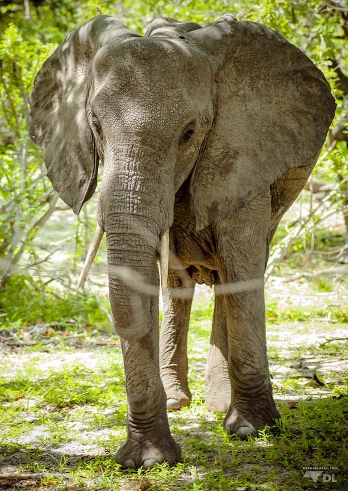 Un éléphant pas content de notre présence