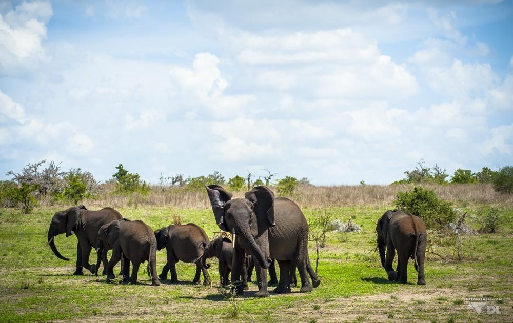 La famille éléphant qu'on a poursuivit