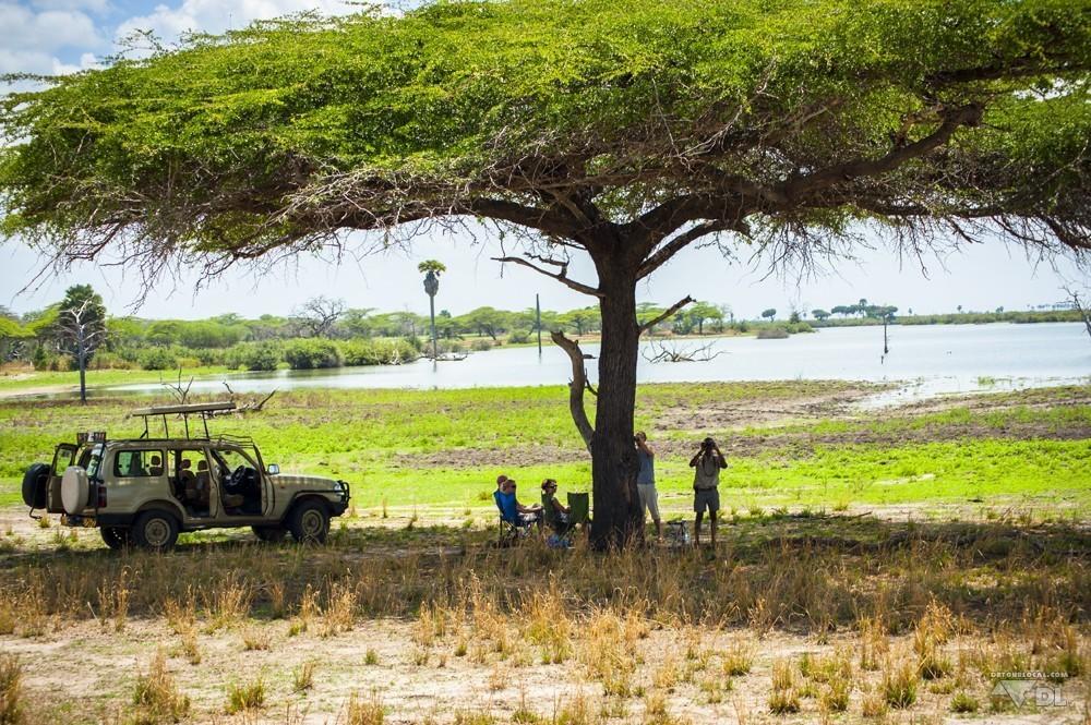 Pause pic-nic du midi sous les grands arbres de la savane