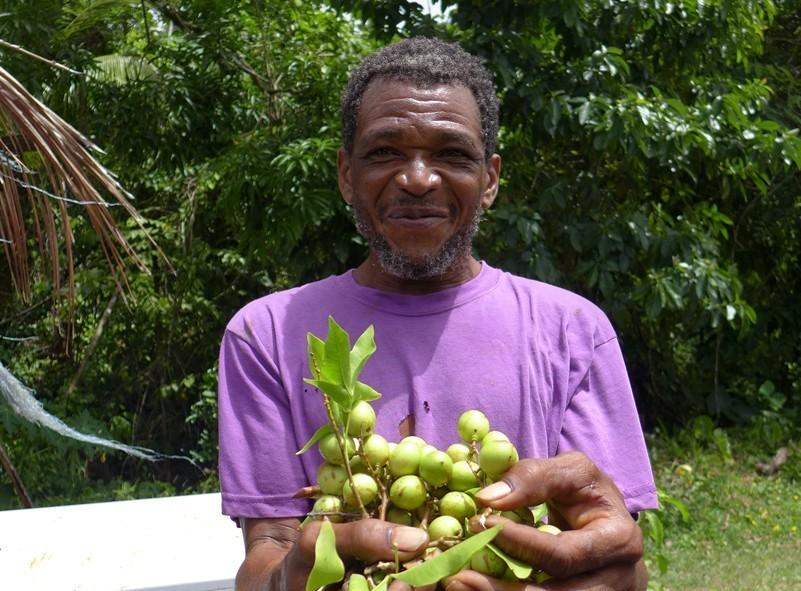 Petit fruit délicieux en Jamaique