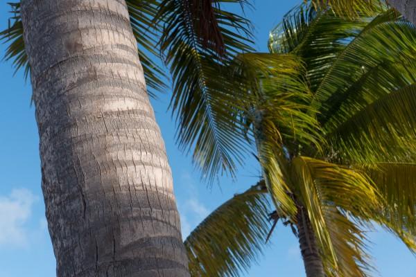 Plages, sables blancs et cocotiers. Bienvenue à St-Martin!