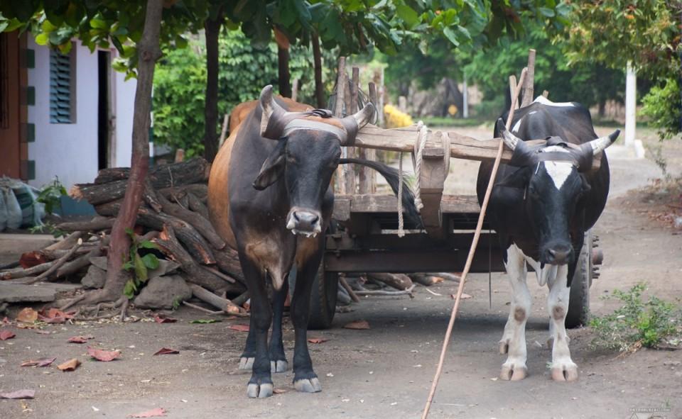 Le quotidien sur l'île d'Ometepe