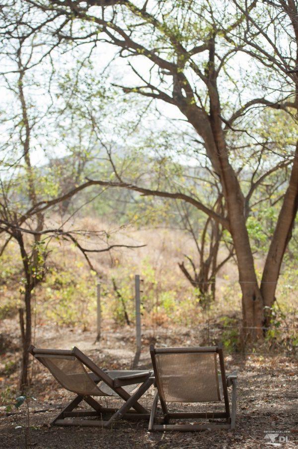 Notre vue matinale à surveiller les singes dans les arbres, café à la main