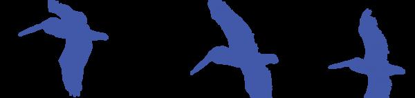 deco_bird