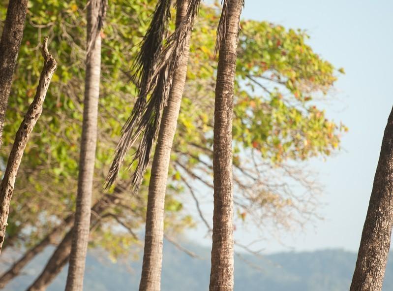 Les palmiers bordant la plage Samara