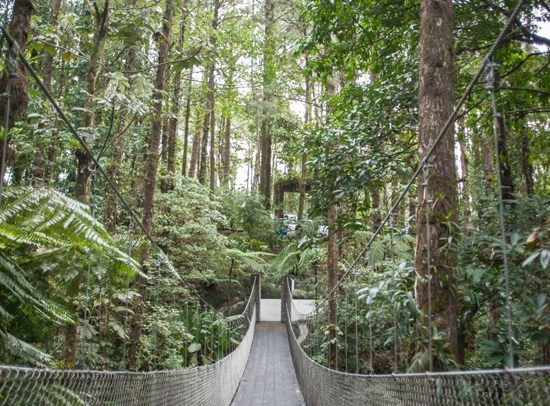 Pont suspendu dans le parc de l'Observatory Lodge tout près d'Arenal