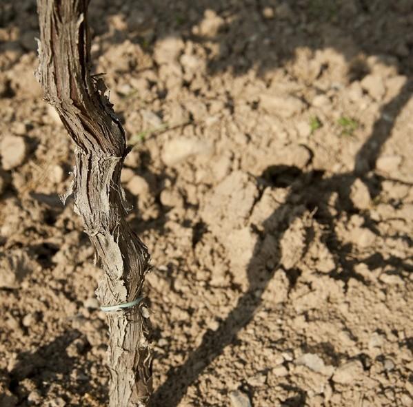 Les terres arides de la région rendent le vin plus coriace et de meilleure qualité