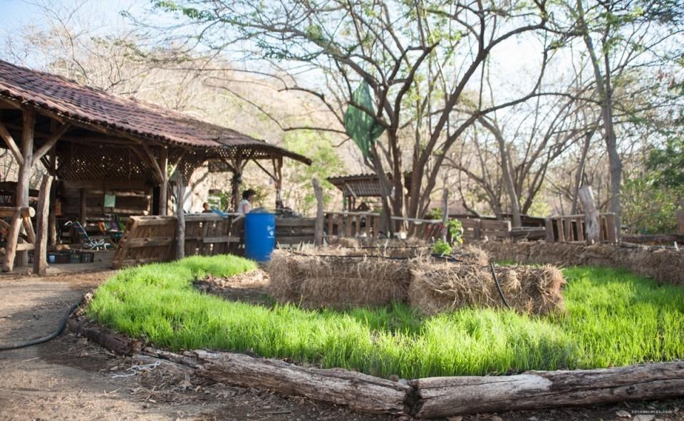 Le mandala garden
