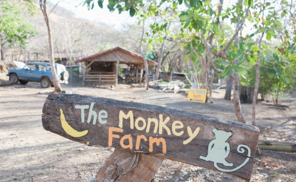 The Monkey Farm