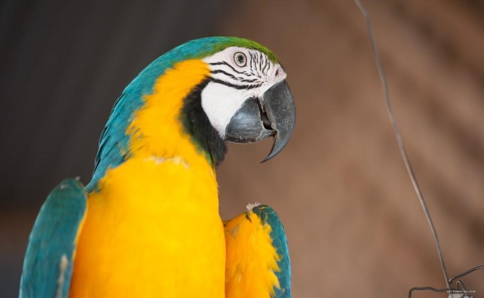 Nica, le perroquet bavard