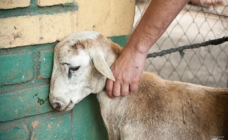 Notre méchoui vivant du Nicaragua chez Laurence et Xavier