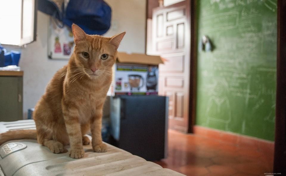 Garfield, le mignon, toujours en quête d'affection