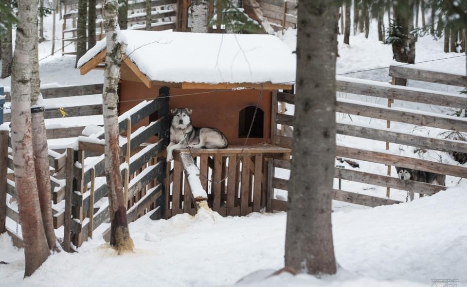 Les cabanes du chenil sont installés en hauteur pour plus de confort