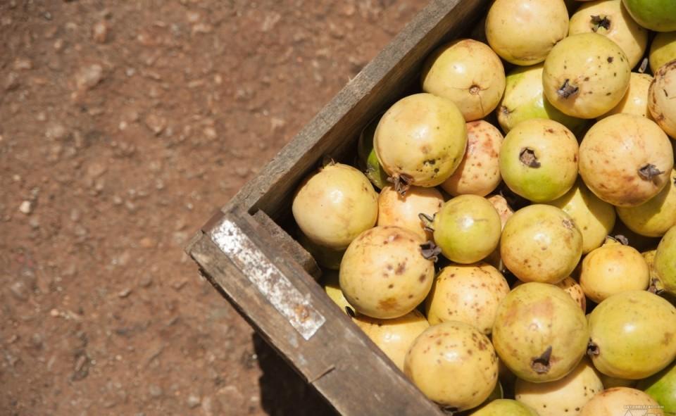 Citron vert en vente dans la rue
