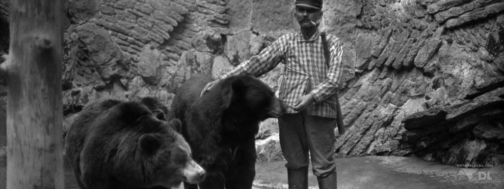 rencontre entre un ours et un grizzly