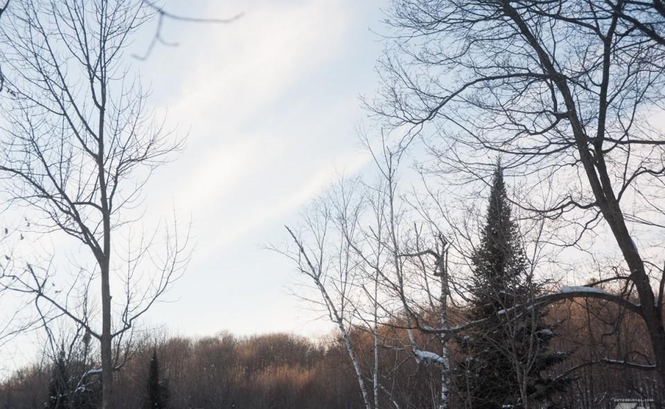 Forêt québécoise par une journée d'hiver bien froide, mais ensoleillée