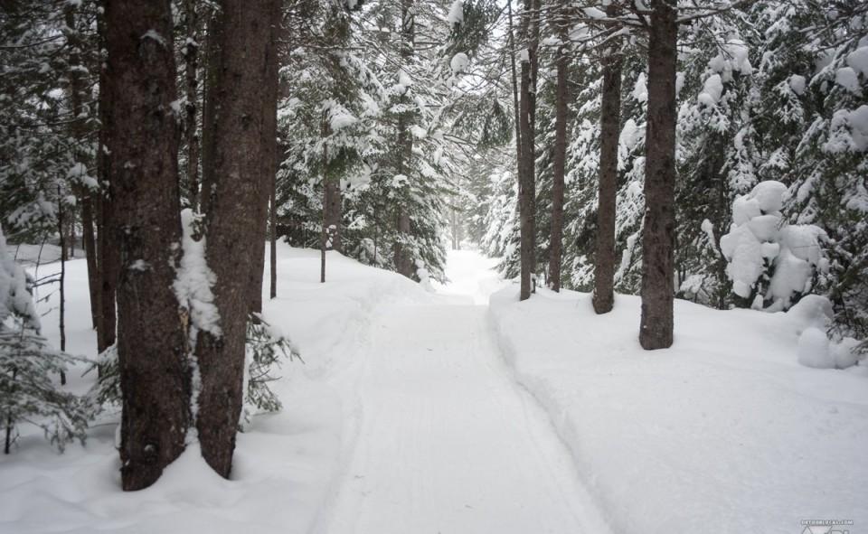 Un sentier en forêt au Québec après un long retour à l'hiver canadien