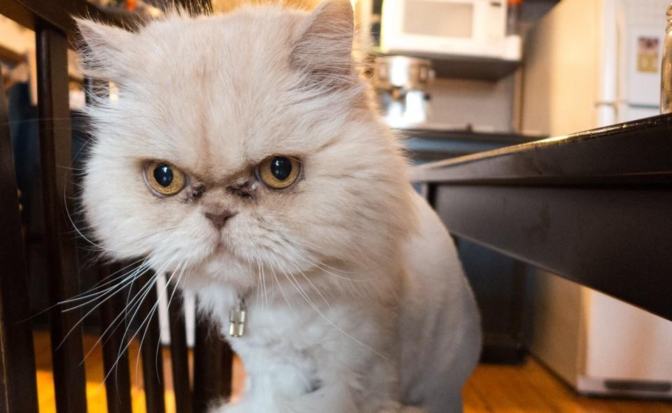Le House Sitting c'est aussi garder le chat de nos hôtes lorsqu'ils sont absents