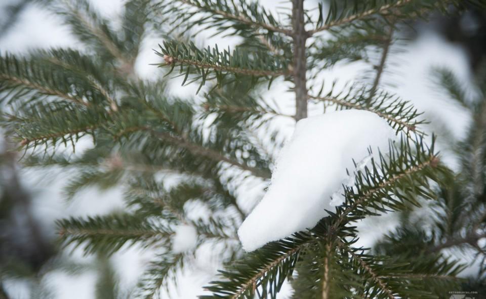 Le sapin couvert d'un beau manteau blanc