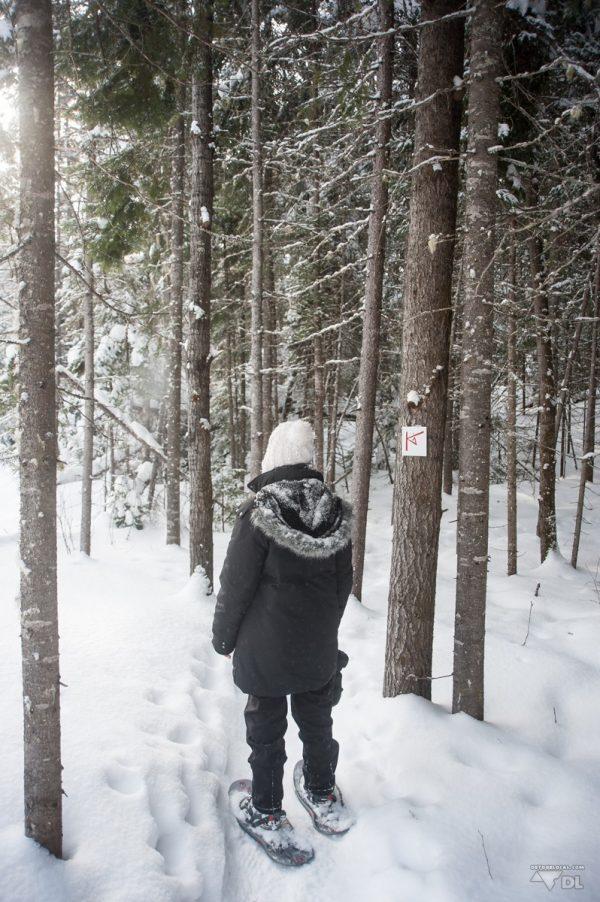 De nombreux sentiers dans le parc Ouareau sont accessibles à même le site de Kabania