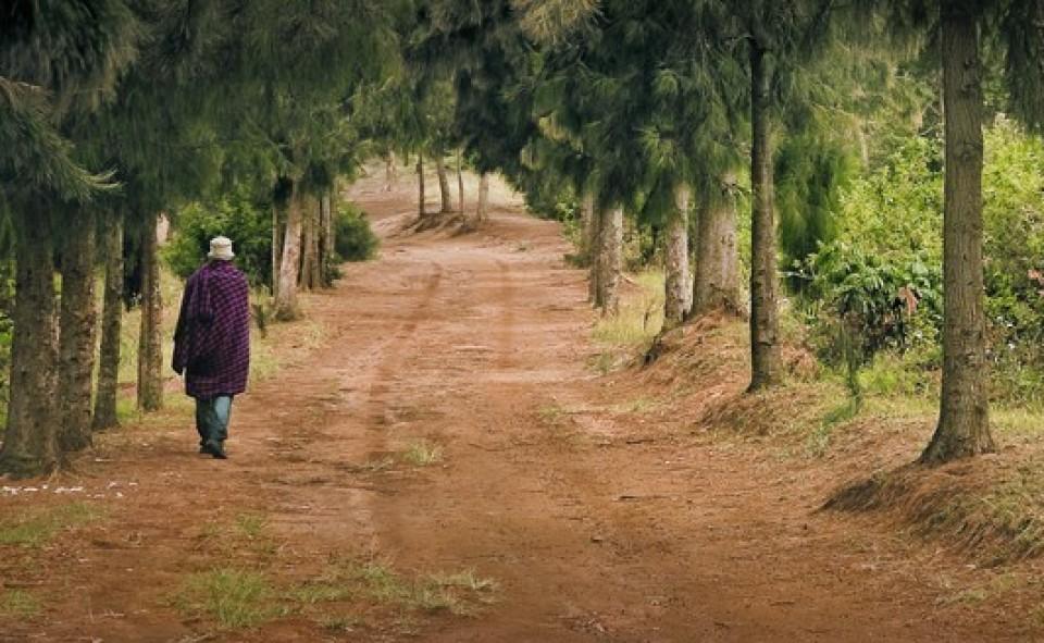 Lushoto, walking massaï