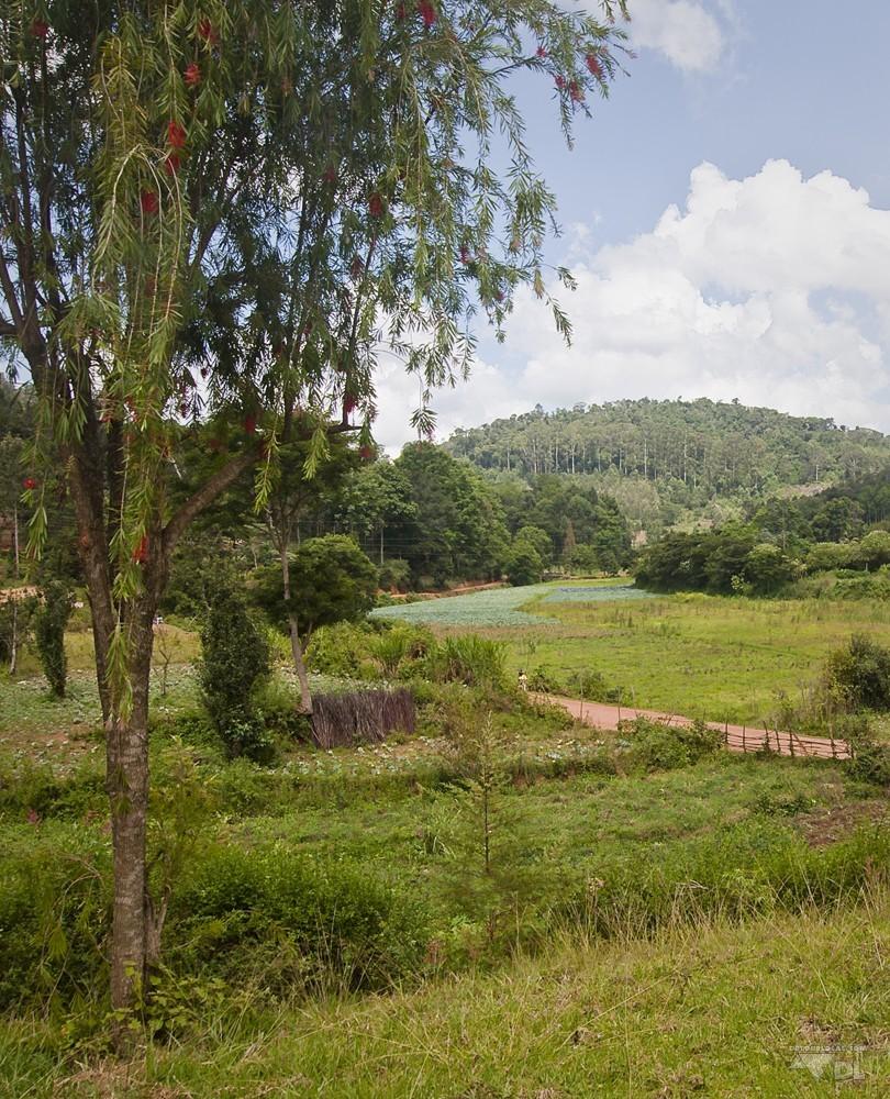 Le Lushoto et ses montagnes d'Usambara, vraiment différent de la métropôle