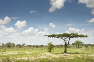 La savane typique de la Tanzanie