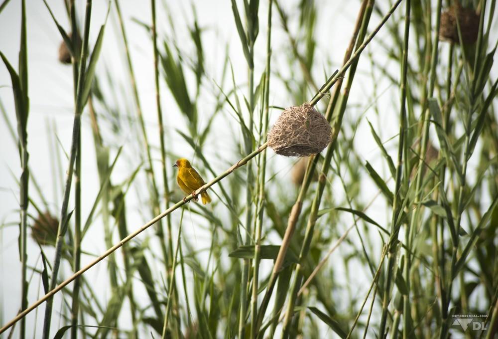 les oiseaux et leur nids en boule