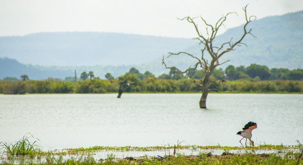 Vue de notre lieu de pic-nic, pendant safari Selous