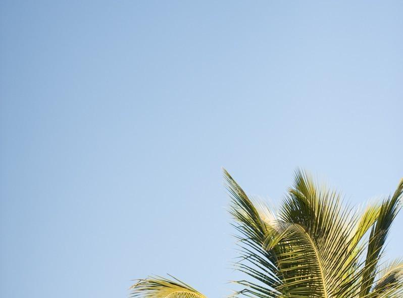 Remplacer le sapin de Noël par le palmier, rien de tel pour accentuer la nostalgie