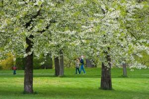 Magnifique végétation dans les parc de la capitale d'Oslo en Norvège