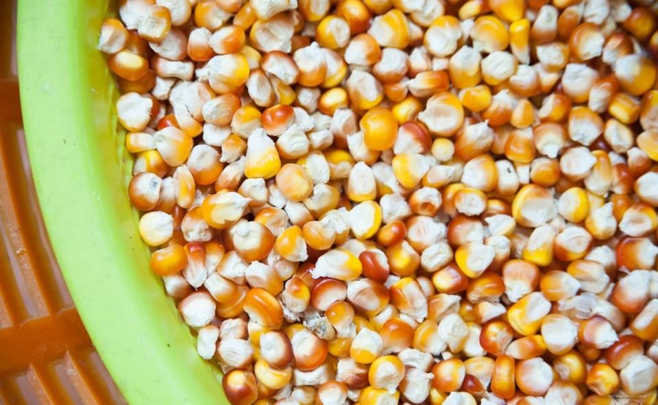 En grain et séché au soleil, on retrouve le maïs comme on l'appelle chez nous.