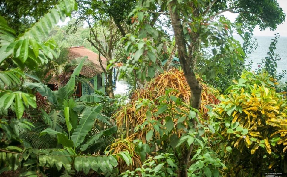 La jungle au bord d'une plage magnifique, c'est ça le Panama et Bocas del Toro