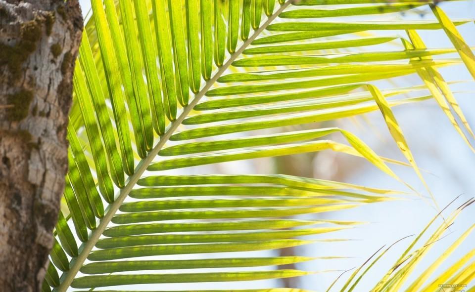 Ambiance zen sous les rythmes de la mer sur Little Corn Island