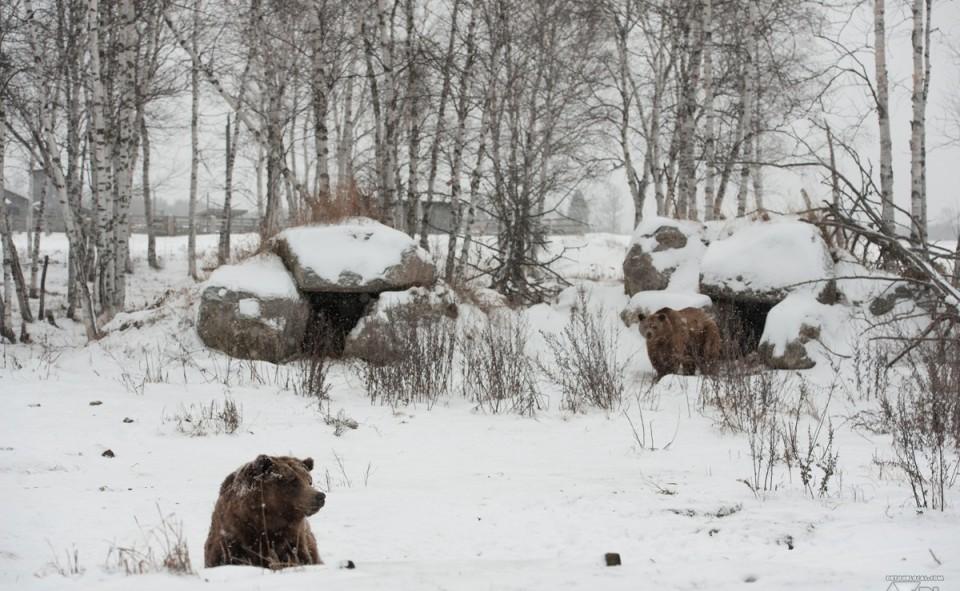 Un ours qui hiberne en hiver, oui et non, ça dépend