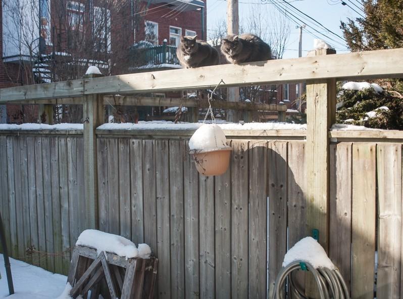 Les deux chats de nos hôtes qui ont hâte que la chaleur revienne