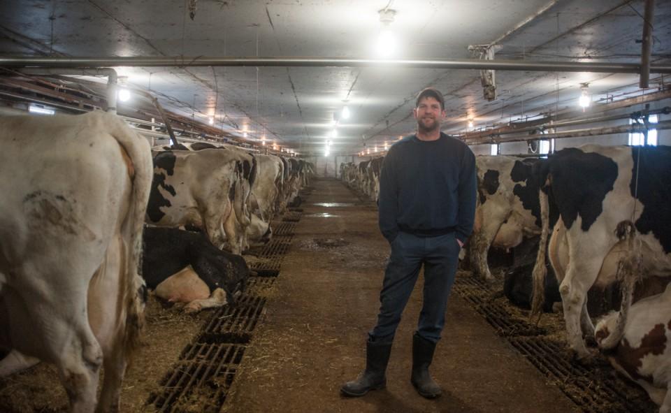 Le propriétaire entouré de ses vaches