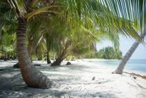 Panama, San Blas. Cocotier et sable blanc