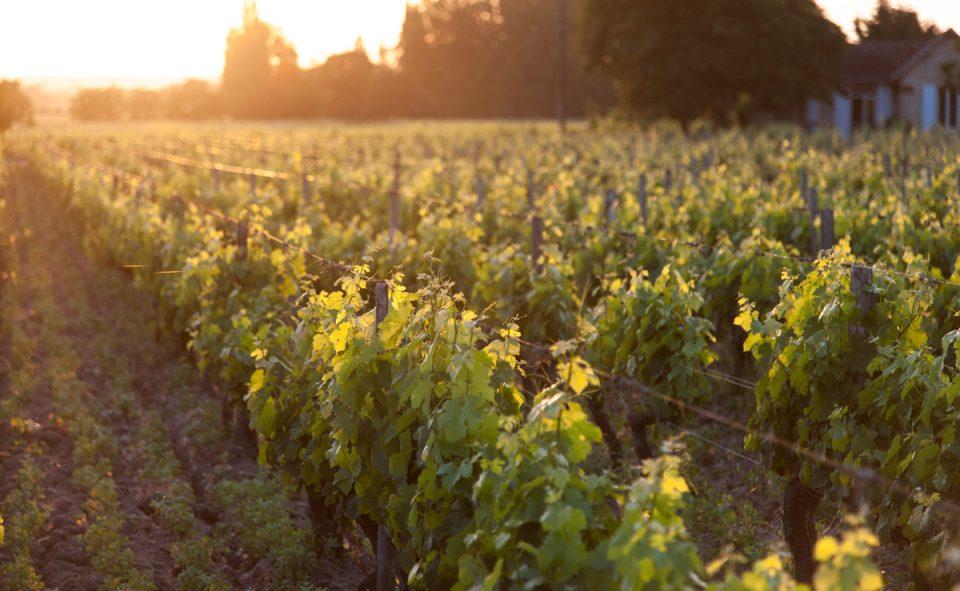 Dormir en van au milieu des vignes dans la région de Bordeaux